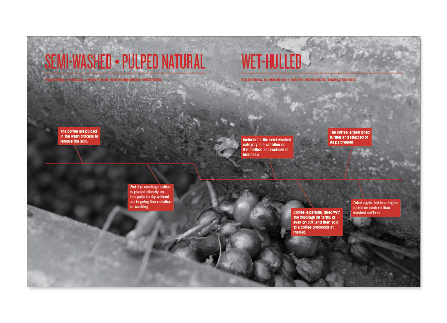 A Guide to Coffee Semi-washed Pulped Natural Wet-Hulled